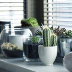Guerneville Home Rentals